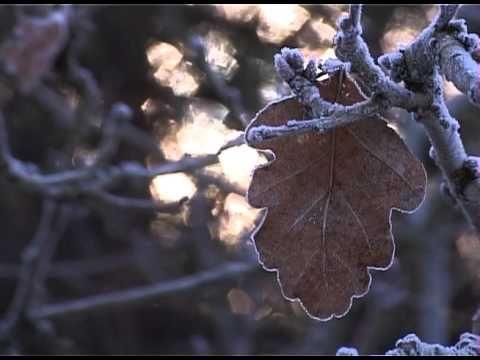 Glimpses by The Haiku Project by Ireneusz Cyranek - YouTube