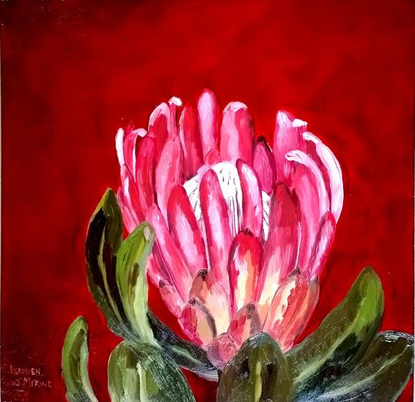 Title: Protea Compacta Table Mountain Cableway Medium: Oil paint on board Size: 400mm x 400mm Artists thoughts: This painting is digitally blown up in size and is used as a wall decoration in the stone building on Table Mountain, Cape Town