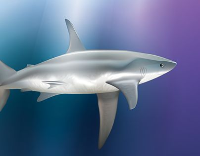 "Check out new work on my @Behance portfolio: ""Shark Vector Study"" http://be.net/gallery/32801275/Shark-Vector-Study"