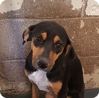 Pictures of Sister a Hound (Unknown Type) Mix for adoption in Fort Smith, AR who needs a loving home.