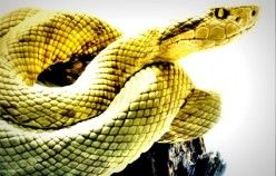 The Top 3 Anti-Wrinkle Serums That Use Syn-ake Peptide (Snake Venom)