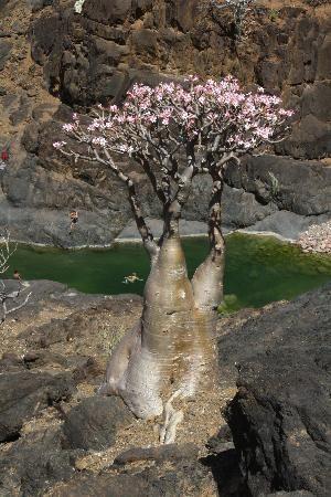 Socotra Island Yemen, Middle East | Socotra Island Photos - Featured Images of Socotra Island, Yemen ...