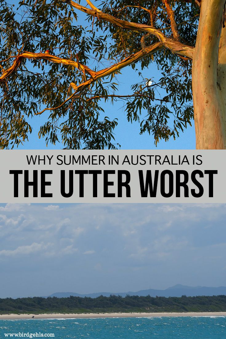 Is summer the best time to visit the Land Down Under? Ah, maybe if you like sweating puddles, enjoy being harassed by bugs of all descriptions and are made of money. Here are a few reasons why summer is the worst time to visit Australia - come visit any other time of the year, for your own sanity's sake. #Australia #Travel #Summer #TravelTips via @birdgehls