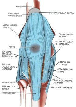 133 best anatomy knees images on pinterest human anatomy chondromalacia and runners knee picture used from principles of anatomy and physiology sixth edition tortora and n published by harper row 1990 ccuart Choice Image
