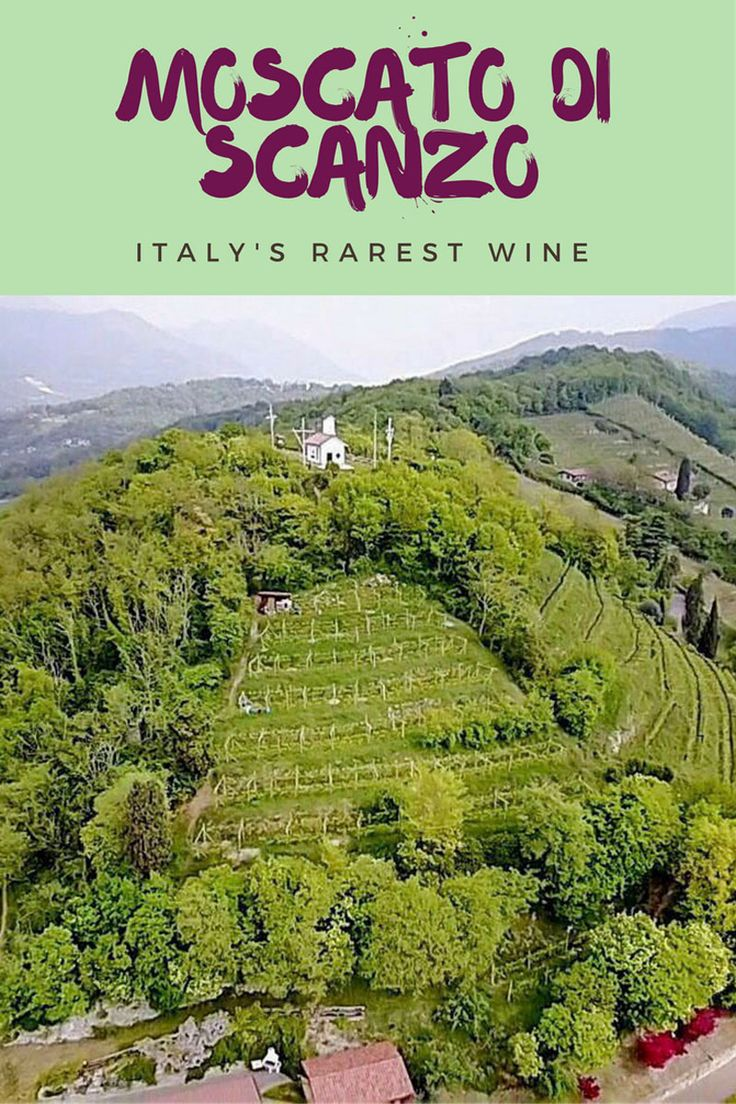 Moscato di Scanzo, the rarest italian wine - Wine in northern Italy, the best Italian wine, Italian wine family, italian winery
