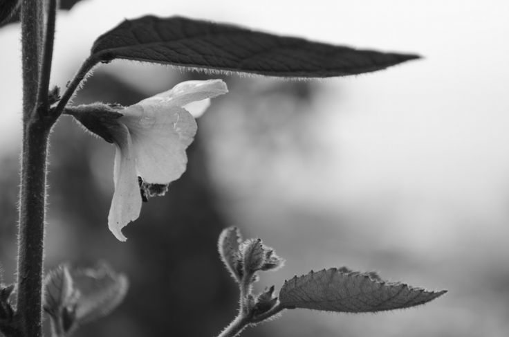 Other flower by Leonardo Lalvay on 500px