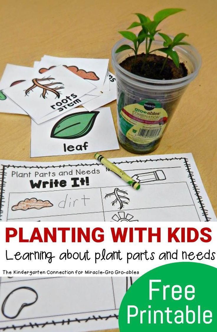 Make Planting With Kids Fun And Hands On While Learning About Plant Parts And Needs With This Fun An Parts Of A Plant Plants Kindergarten Kindergarten Science [ 1125 x 736 Pixel ]