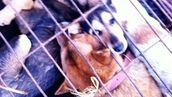 Stop Horrific Dog Meat Trade!!! Demand China Make Animal Cruelty Laws!!!
