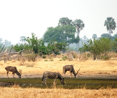 Kudu and Zebra