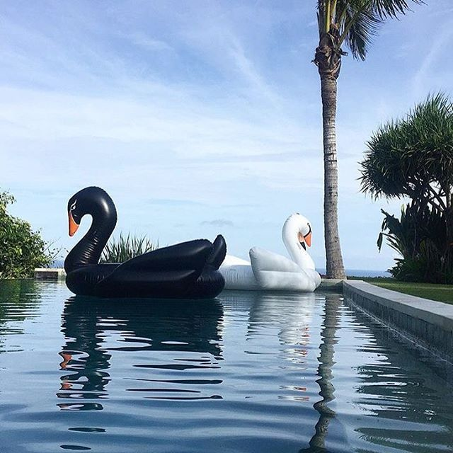 Funboy makes awesome, oversized pool floats in black, white and gold swans