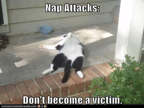 funny cat pictures - Lolcats: Nap Attacks  I've been feeling this way a lot lately.