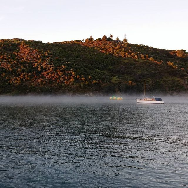 Matiatia morning mist #matiatia #morningmist #autumnwaiheke #waihekecommute #lovematiatia #atawhai_whenua #newzealand #waiheke_island