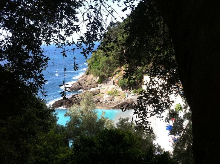 Ulivi vista mare.....e che vista !!!!! #blogtourportofino #Liguria