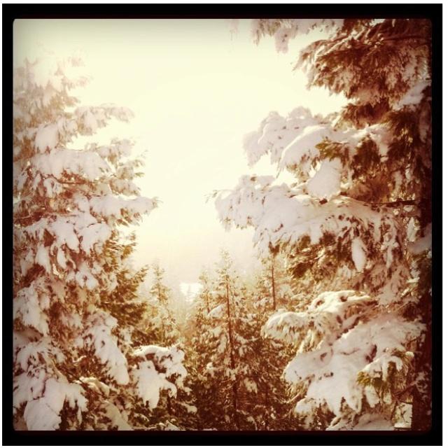 Mt. Ashland, OR.  I love the snow!: Lights, Style, Snow, Ashland, I'M, Natural, Photography