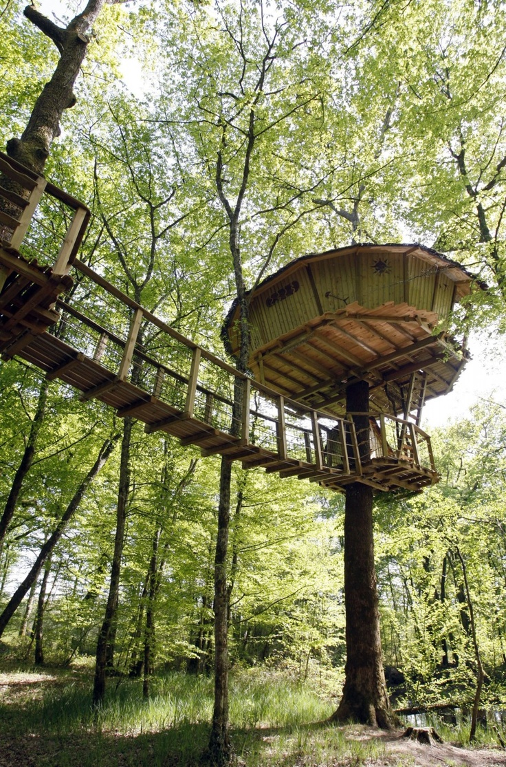 The World's Best Tree House Hotels: How to Vacation like the Swiss Family Robinson