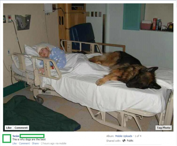 This is why Dogs are the Best