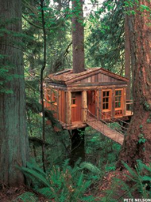 Adventure awaits at these cozy tree house lodges around the world for those  willing to branch