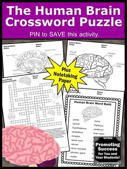 You will receive a printable crossword puzzle worksheet for students to practice the human brain vocabulary. It is a fun supplement to a body systems unit study for upper elementary (4th, 5th, 6th, 7th grade and middle school. There is a word bank, puzzle,clues, answer key and two note-taking writing papers with brain diagrams on each. It works well in science centers or stations as a review, test prep, formative assessment or extra practice for kids with special education learning needs.