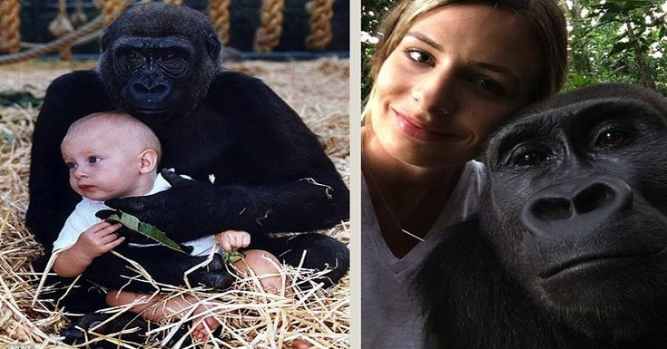This young woman reunited with her childhood best friend, a gorilla named Bimms…