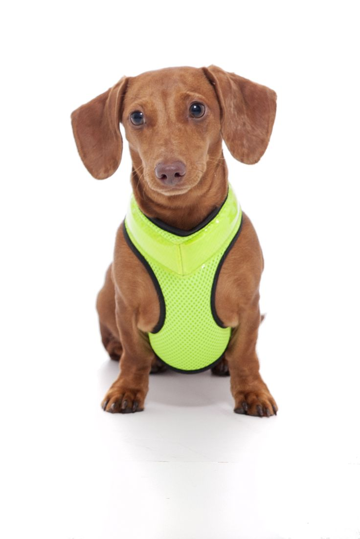 Stay safe and bright at night and never lose your dog again! Available in 5 sizes on Amazon. :)
