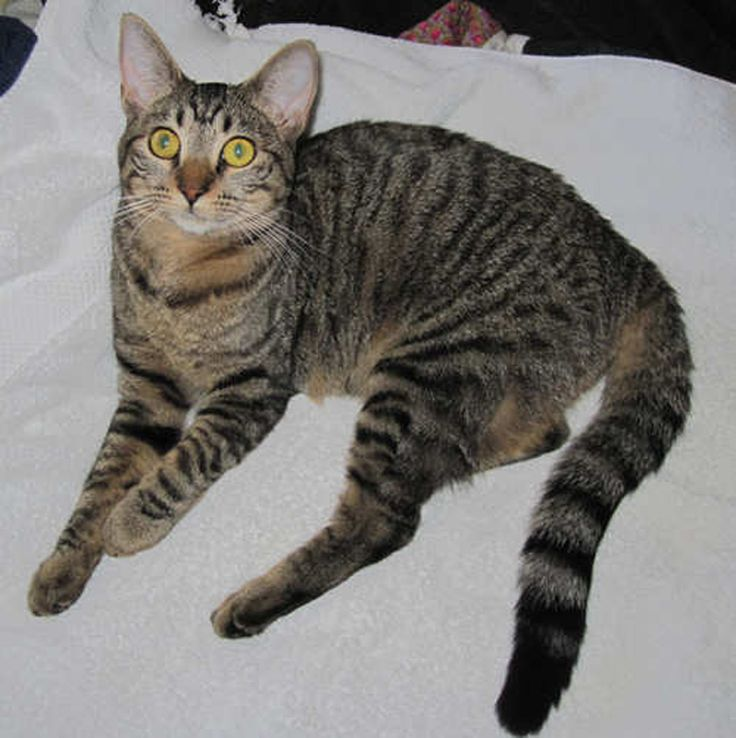 Black And Grey Striped Cat