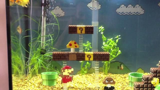 Ofcourse! this wold make my aquariums list :) *hums Super Mario Brothers