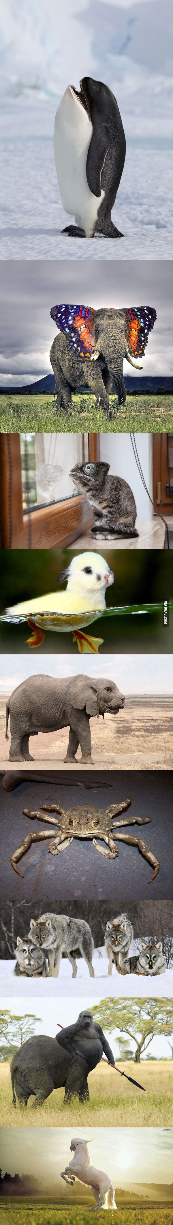 Majestic animal photoshopping... my favorite is the last one :)))))