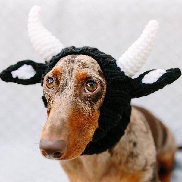 Bull Zoo Snood Pet Halloween Costumes Diy Dog Costumes Dog