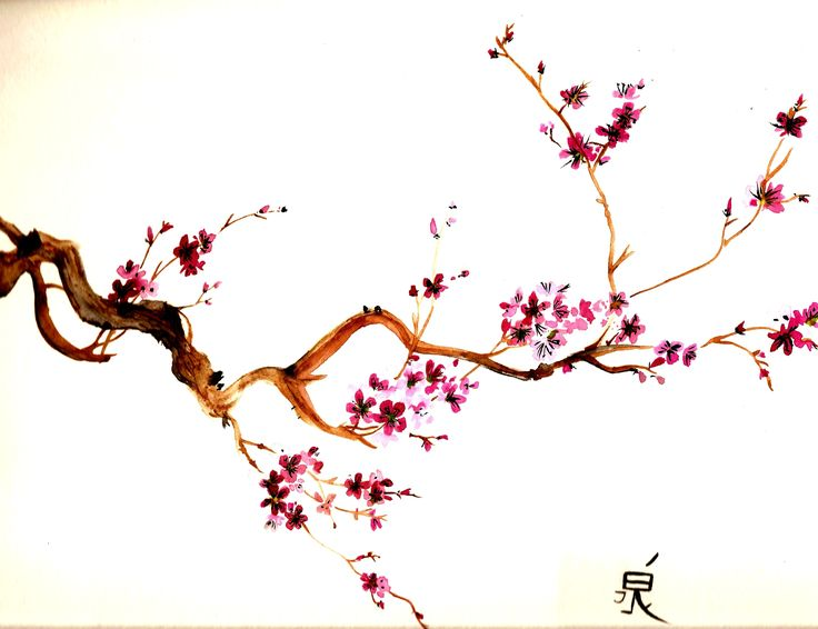 Sakura Tree Watercolor Sketch By Crimsonsanctuary