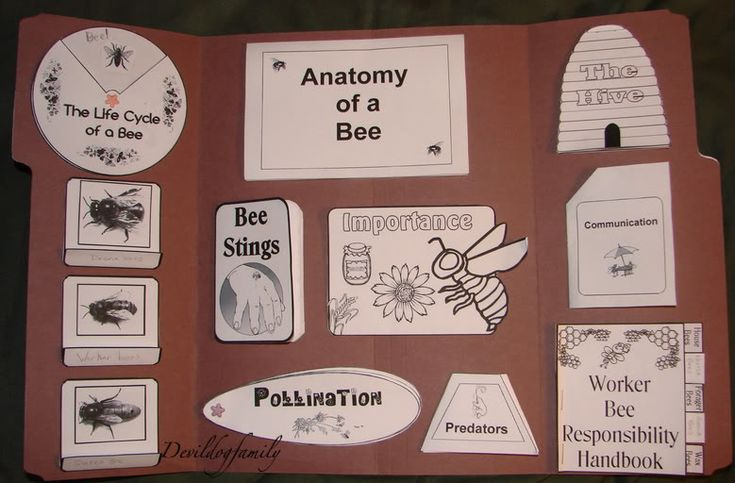Bee Lapbook printables, link to Scholastic site with free bee lessons and printables
