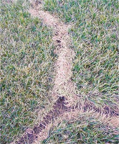 Gopher In Backyard: 75 Best Images About Misc. Lawn Problems On Pinterest