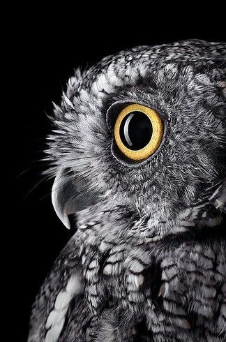 """When the owl sings, the night is silent."" ― Charles de Leusse 