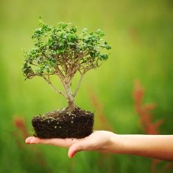 How to grow your own Bonsai - Garden & Outdoor, Lifestyle
