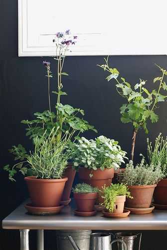 10 best images about container plants on pinterest kale for Design indoor herb garden