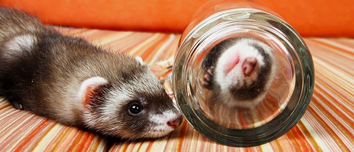 How To Ferret Proof Your Home | Love That Pet™