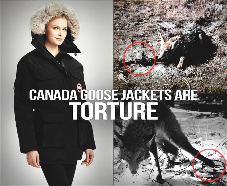 Canada Goose kids outlet discounts - Canada Goose Jackets Are TORTURE! | Animal Rights | Pinterest ...