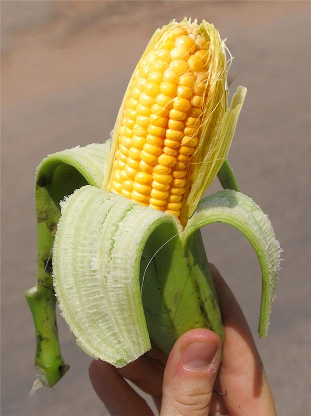 http://zipmanipulation.wordpress.com/  #hybrid #fruit #mais #banana