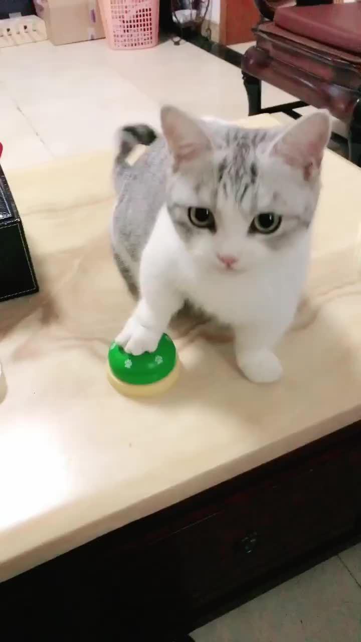 Tik Tok Animals Turkeyanimals On Tiktok Kedi Cats Animals Dog Cat