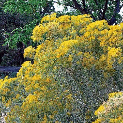 96 Best Images About Utah Native Plants On Pinterest