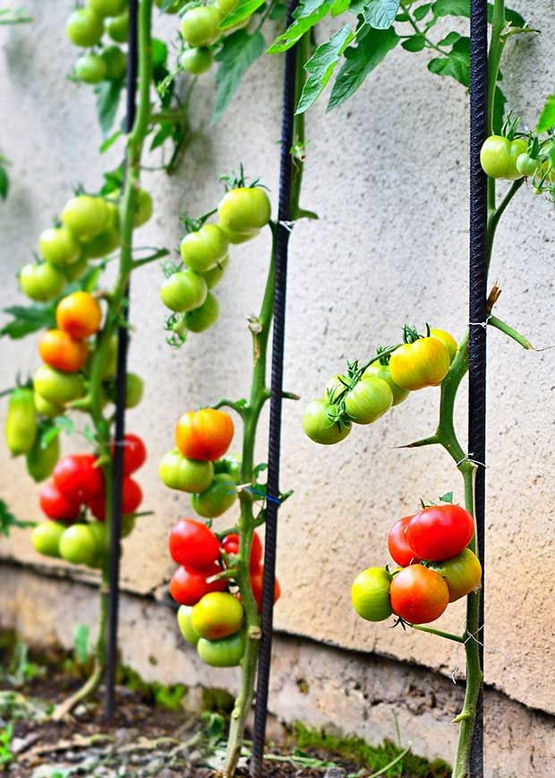 5 Space Saving Vegetables That Can Be Trained To Grow Vertically