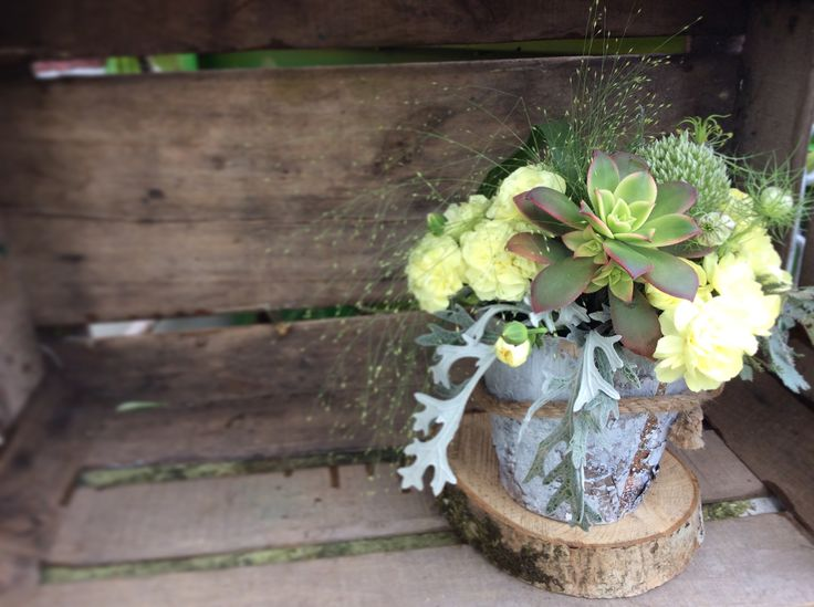 We are having loads of fun these days combining succulents and wood