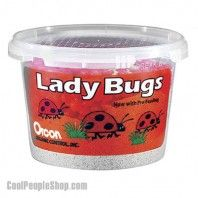 Live Ladybugs, Approximately 1,500 Count | Cool People Shop