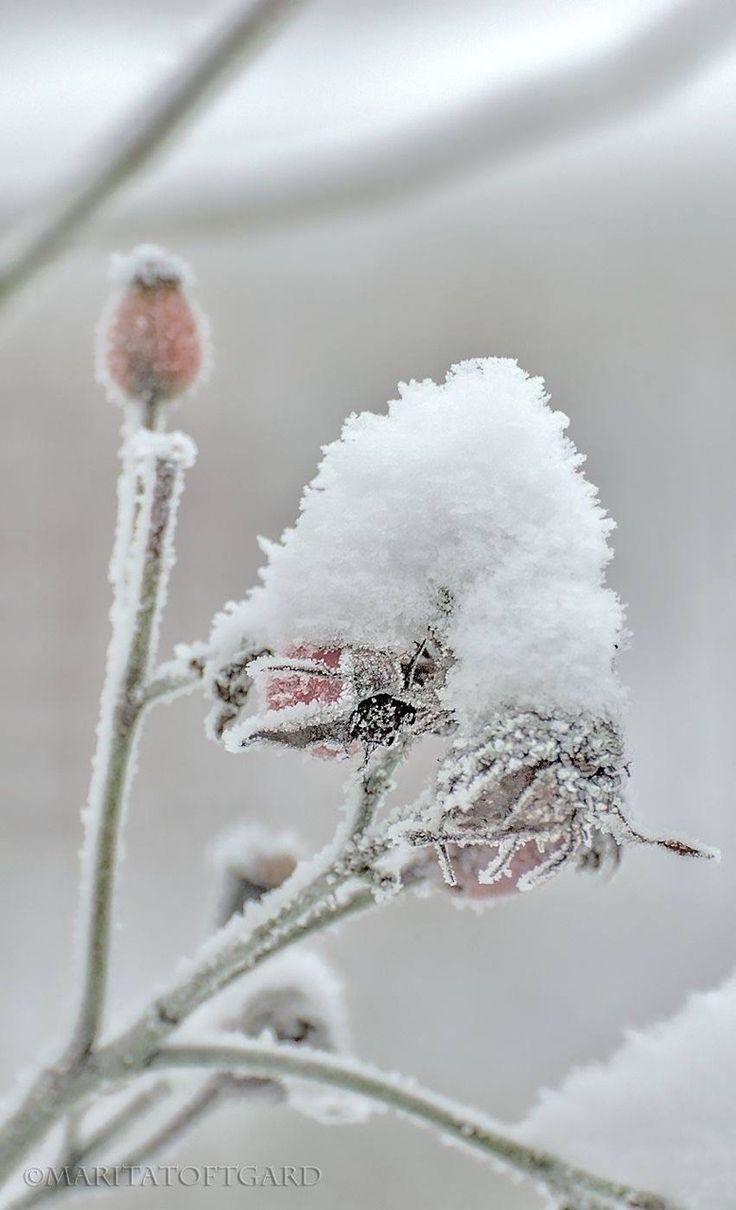 essie peak show: Gipfelstürmer, Schneegestöber! Ischgl oder St. Moritz? Graziös, aber nicht aufdringlich - auf jeder Après Ski Party ist peak show der Liebling aller Schneehasen: Pudrig zart fangen wir den Gletscherschnee der Alpen ein. Der Berg ruft!