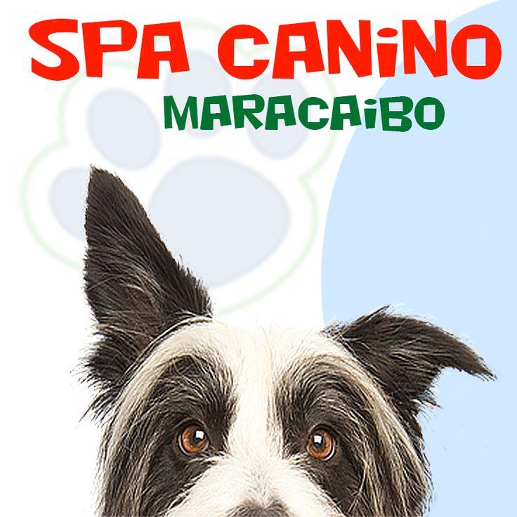 Spa Canino Maracaibo ofrece: cursos de peluquería canina, accesorios para tu mascota, grooming, spa, peluquería, juguetes, vacunas, medicinas, consultas veterinarias, hospedaje canino, Visítanos