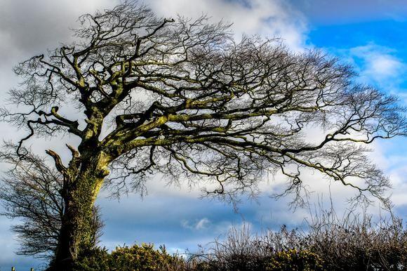 Tree from fairytales