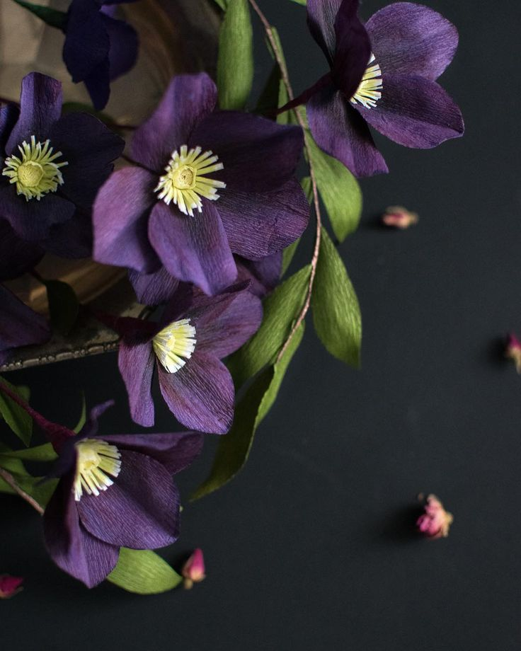 """Deep purple crepe paper hellebores - Jessie Chui 