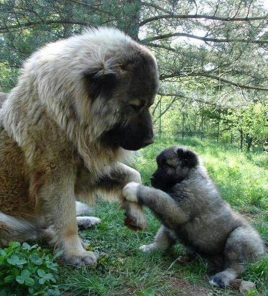 Beautiful big dog an pup