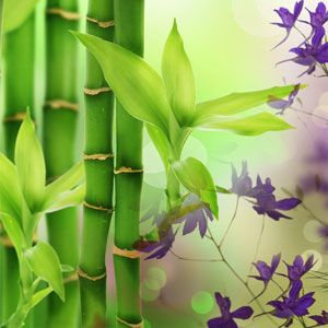 Australian Bamboo Grass Fragrance Oil - http://www.naturesgardencandles.com/candlemaking-soap-supplies/item/rf-a1/-australian-bamboo-grass-fragrance-oil.html