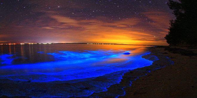 mar de estrellas isla vaadhoo - Buscar con Google