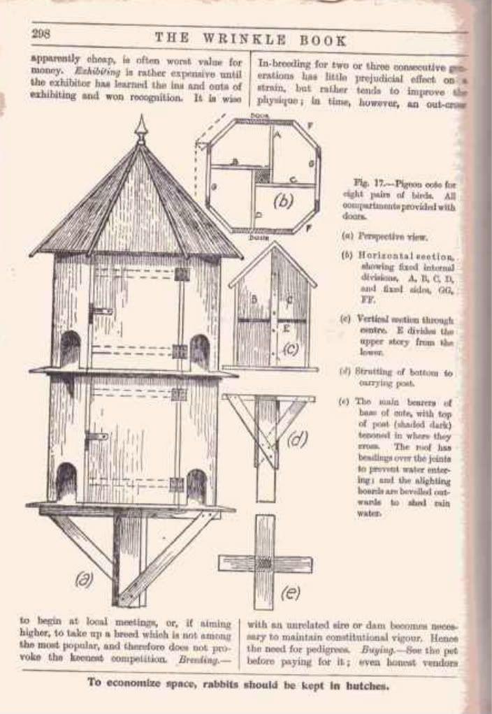 235 best bird house images on pinterest bird houses for Dove bird house plans